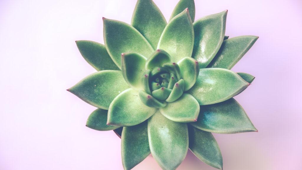 Pourquoi les plantes sont-elles vertes?