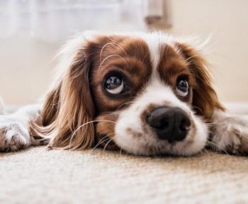 Mais quel âge a votre chien en années humaines ?
