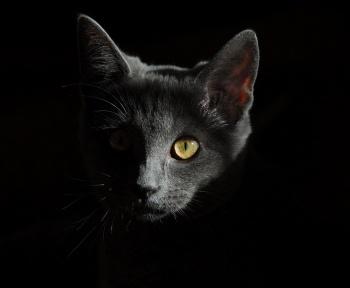 Cyberattaque : Meow efface les bases de données pour le plaisir
