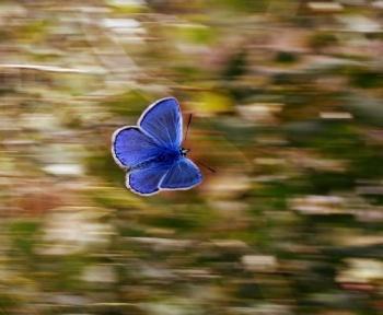 En théorie, un voyageur du temps n'aurait pas à se soucier de l'effet papillon