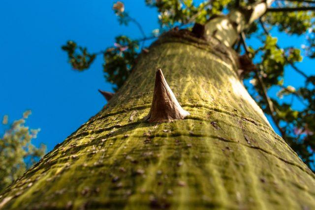 Incroyable, en Australie, même les arbres essayent de vous tuer