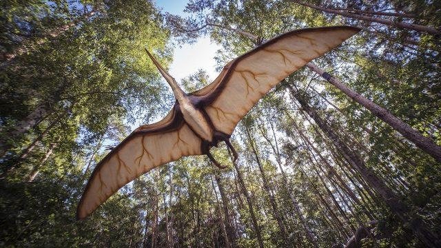 Du nouveau concernant les ancêtres des ptérosaures